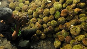 Sumber : http://assets.kompas.com/data/photo/2012/12/16/1456244-berburu-durian-medan-620X310.jpg