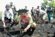 Sumber Gambar: Borneonews.co.id