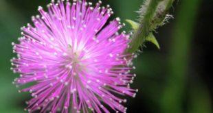 Flora dan Fauna: 'Hidup dan Berteman'