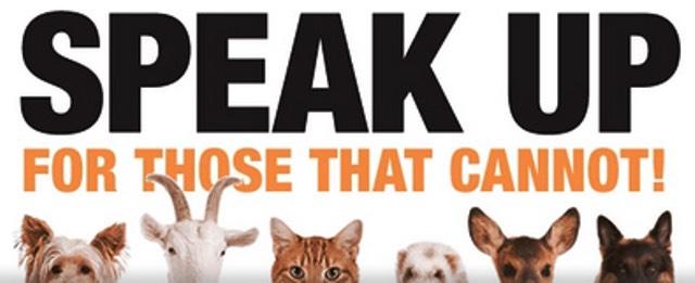 Bentuk kampanye yang dilakukan oleh aktivis untuk memperjuangkan hak-hak binatang (sumber : change.org)
