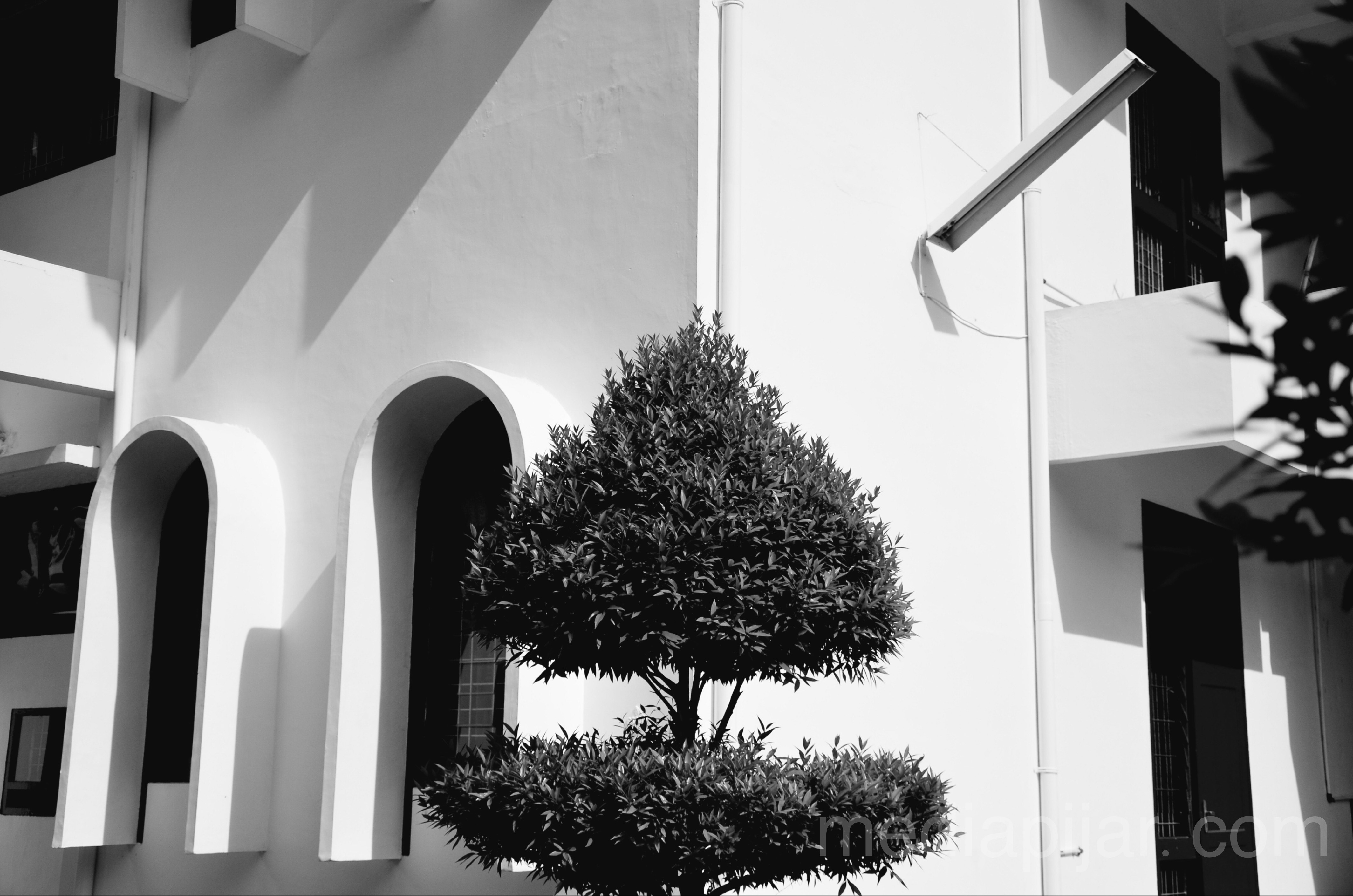 Karakter itu seperti pohon dan reputasi seperti bayangannya. Bayangan adalah apa yang kita pikirkan tentangnya, dan pohon adalah apa yang nyata. (Abraham Lincoln) Fotografer: Savira Dina