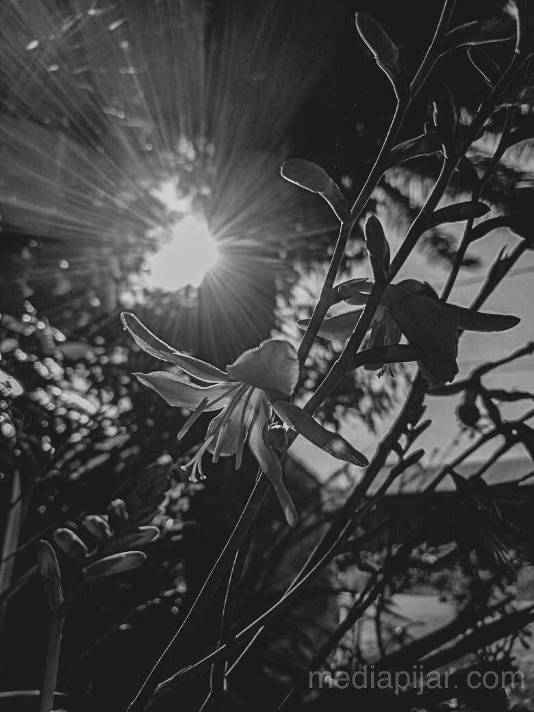 Coba tanyakan pada Mentari, apa tanggapannya tentang Aku Fotografer: Jenni Sihombing